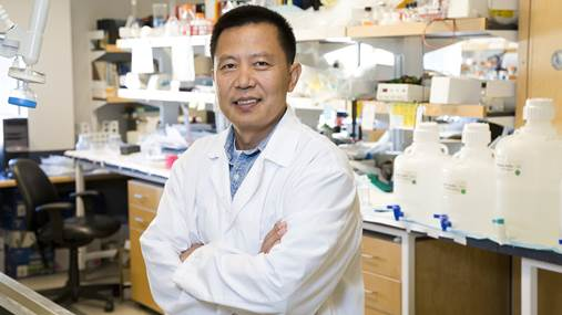 Dr. Yu Tian Wang in his lab at UBC