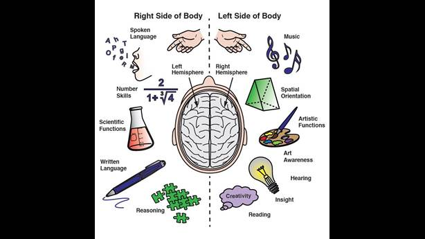 """<p><span id=""""docs-internal-guid-b11fdac9-8b54-9e32-d08d-c087db40d028"""">Functions of the two hemispheres of the brain</span></p> <p></p>"""